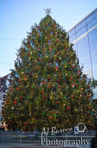 boston christmas tree hOEr