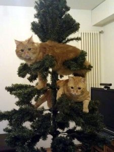 cat in christmas tree NKRE
