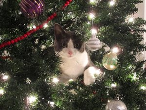 cat in christmas tree kXyi