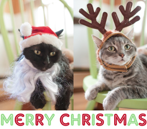 christmas cat pictures bNHk