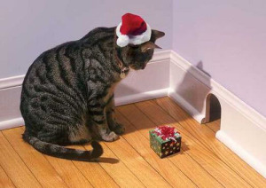 christmas cat pictures kLMc
