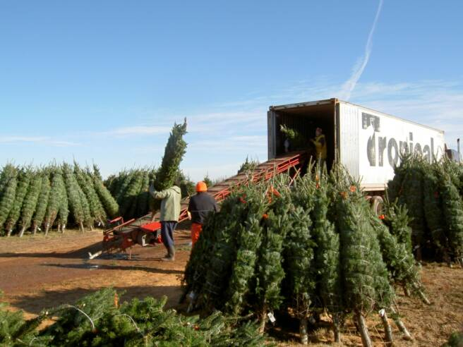 Christmas Tree Farms In Oregon Pictures Wallpapers