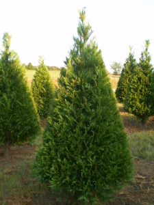 christmas tree farms in virginia sRSN