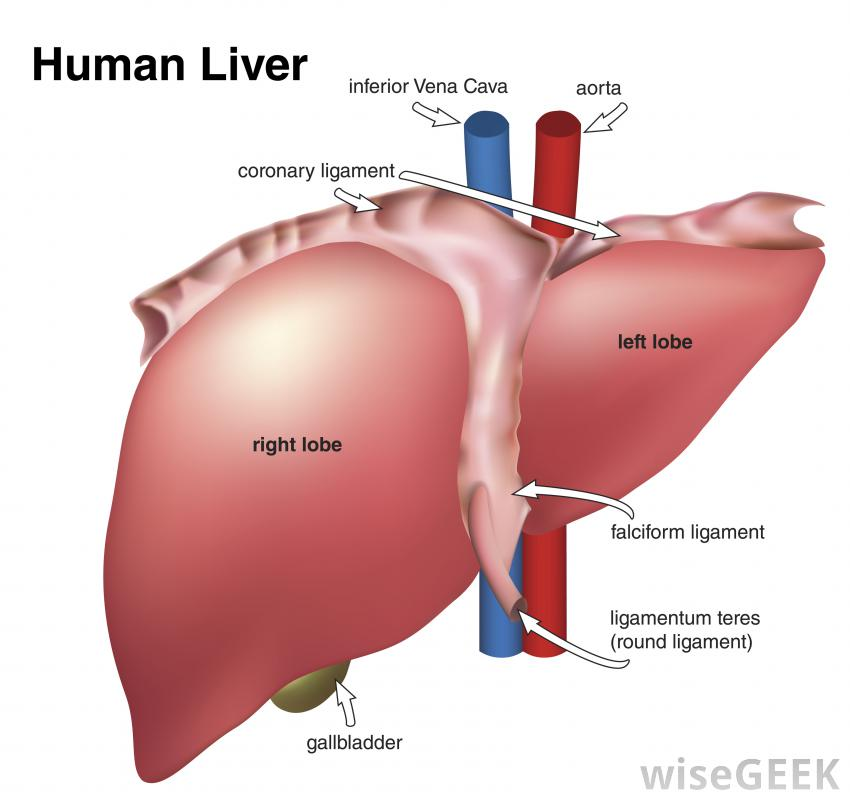 what are the symptoms of liver pRTO