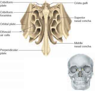Ethmoid Bone Diagram Pictures Wallpapers