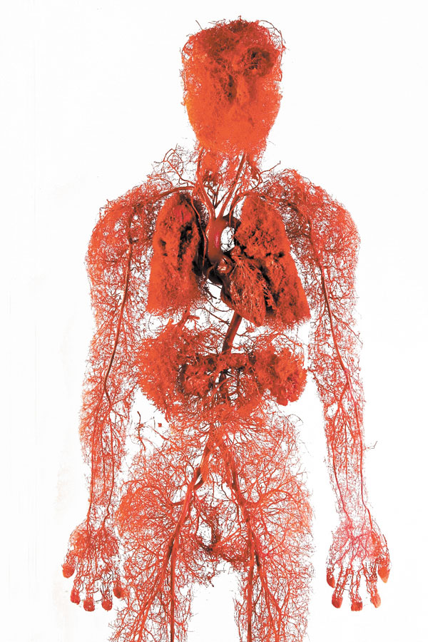 Blood Vessels Human Body Pictures Wallpapers