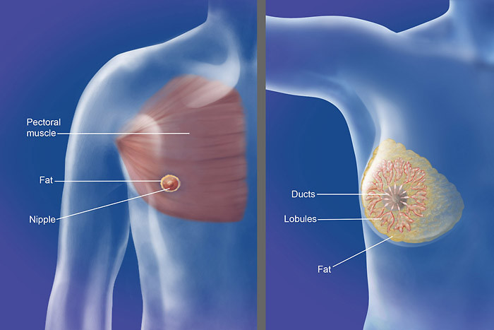 Breast Cancer In Men And Women Qdcnadh