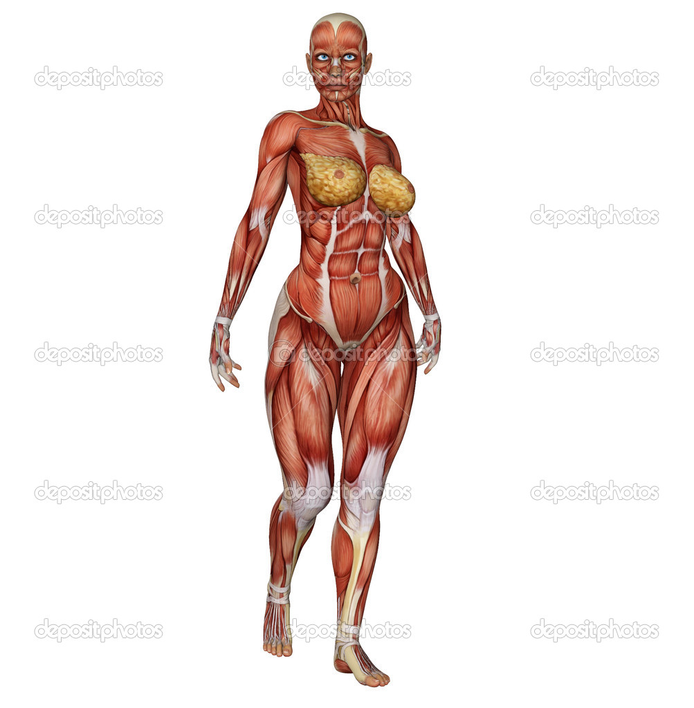 Female Muscular Body Pictures Wallpapers