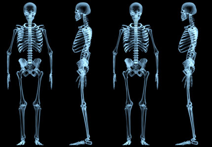 Human Bone Picture Pictures Wallpapers
