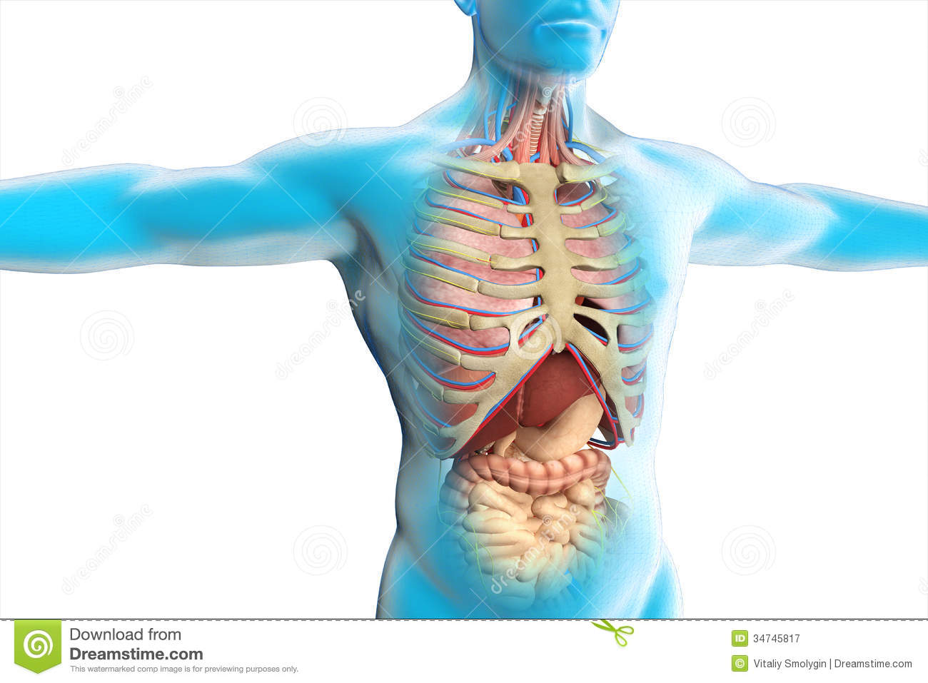 Image Of Anatomy Of Human Body Iiqsvwhi