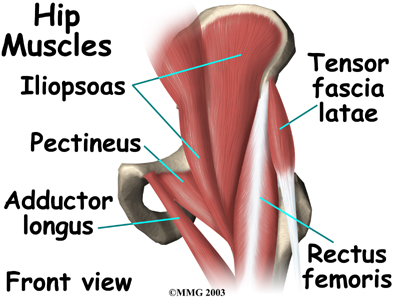 Muscles In Your Hips Pictures Wallpapers