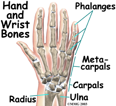 Picture Of Wrist Bones Mjrlus