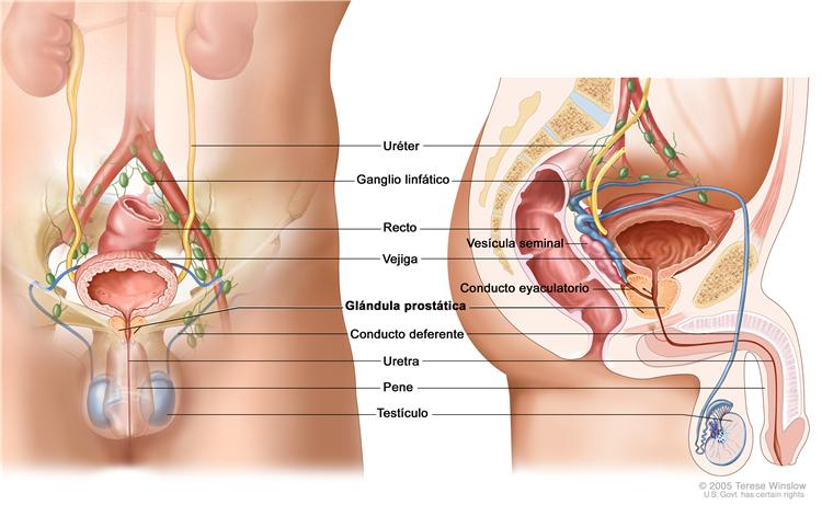 Sintomas De Cancer De Prostata Pictures Wallpapers