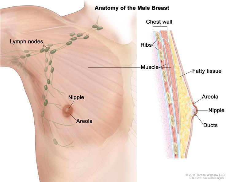 Symptoms Of Men Breast Cancer Pictures Wallpapers