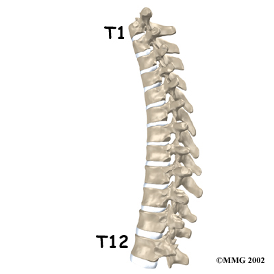 T12 Vertebrae Pictures Wallpapers