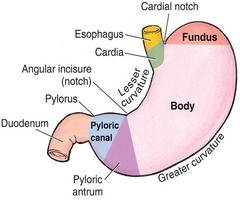 The Function Of Liver Wwwaworldbuycom Human Anatomy Organs Pictures Wallpapers