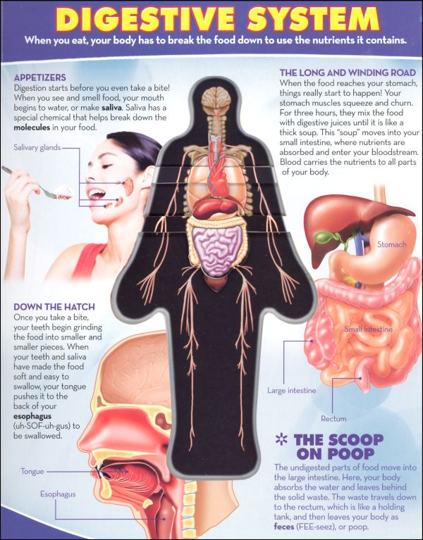 The Inside Human Body Pictures Wallpapers