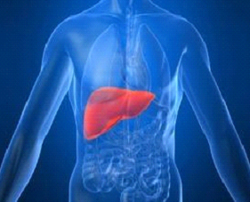Treatment For Liver Disease Using Stem Cells Liver Cirrhosis Therapy Pictures Wallpapers