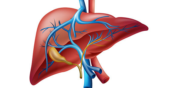 Cirrhosis Of The Liver And The Liver Functions Pictures Wallpapers