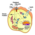 Current Concepts In The Pathogenesis Of Nonalcoholic Fatty Liver Pictures Wallpapers