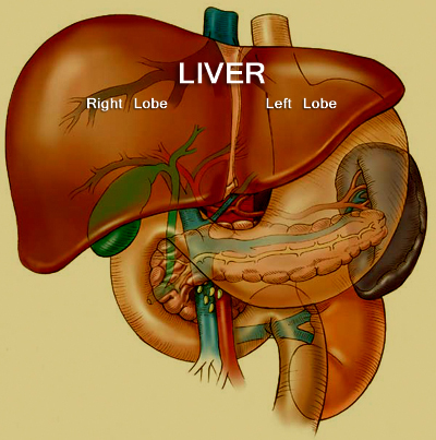 Food For The Liver Pictures Wallpapers