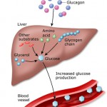 High Liver Levels Pictures Wallpapers