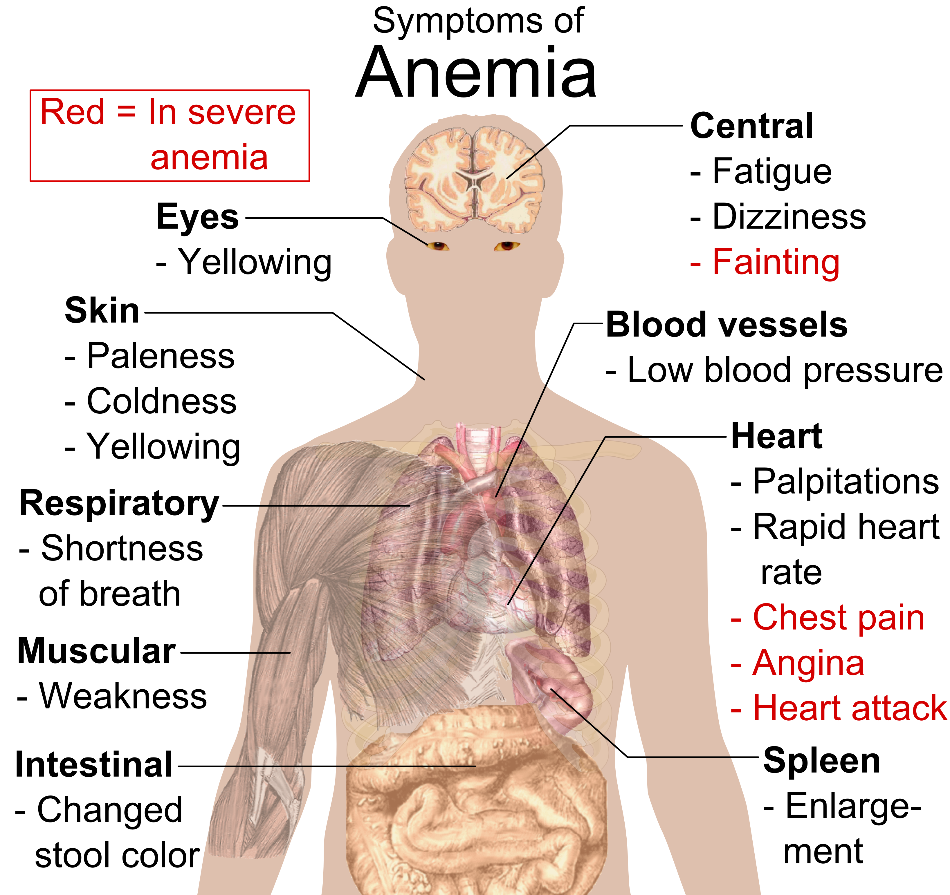 Liver Cancer Symptoms And Signs Pictures Wallpapers