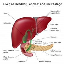 Liver Failure Diet Pictures Wallpapers