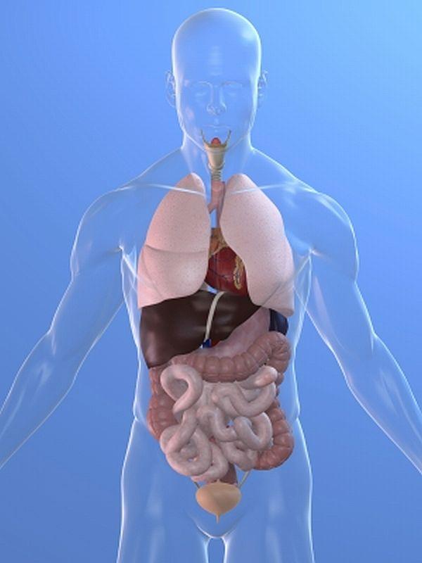 Human liver location