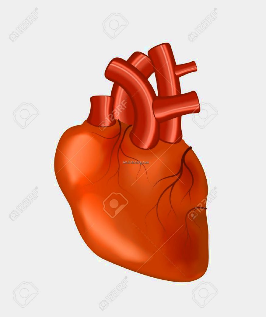 Human Heart Clipart Pictures Wallpapers