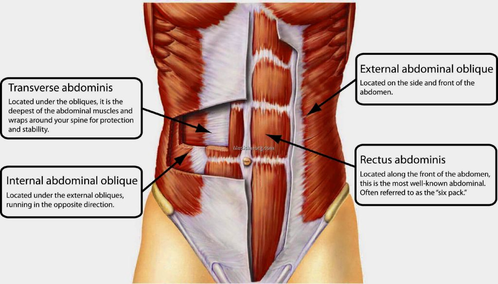 parts of the abs