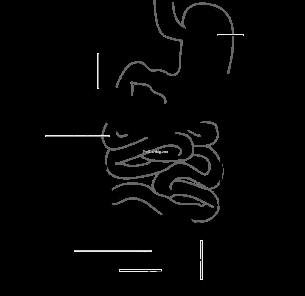 Small And Large Intestine Diagram Pictures Wallpapers