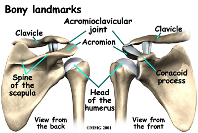 Acromioclavicular Joint Pictures Wallpapers