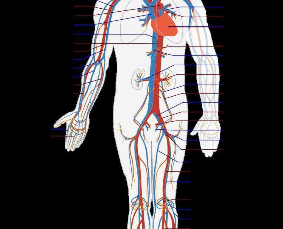 Anatomy charts uk