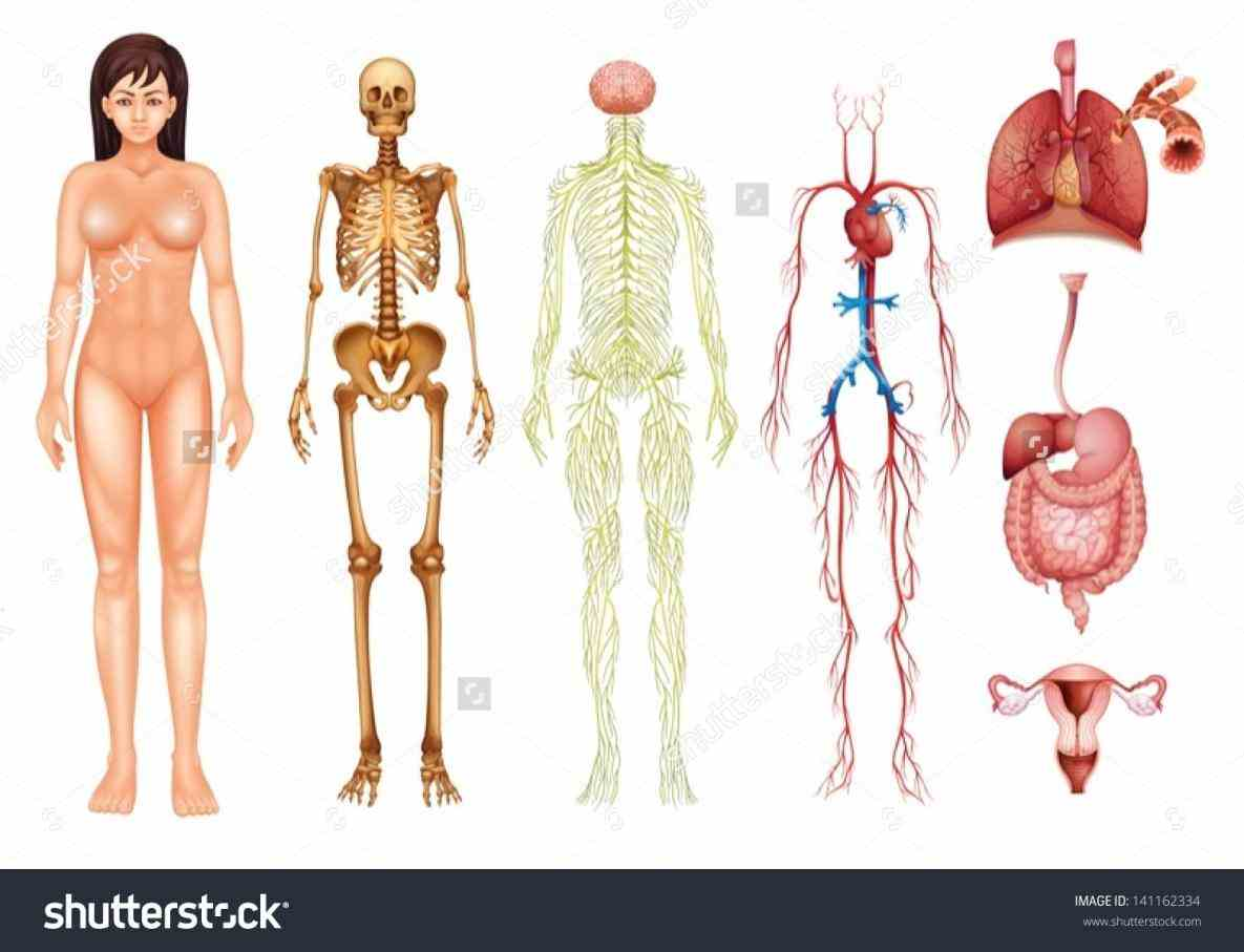 Images Of Human Body Systems Pictures Wallpapers