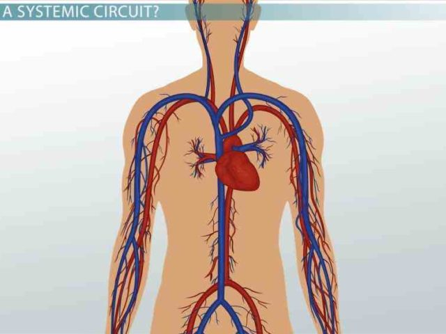 Carry Oxygenated Blood Except of the veins carry ...