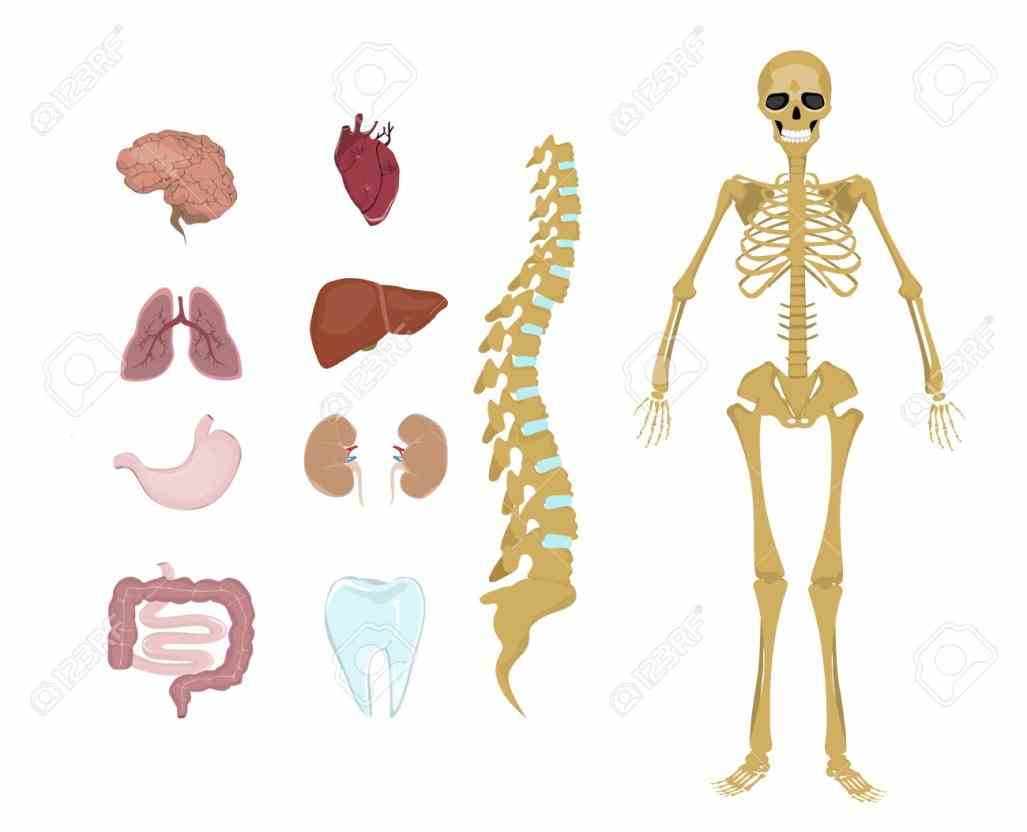 In The Human Body mai the human body is made up of organ systems that work with one another