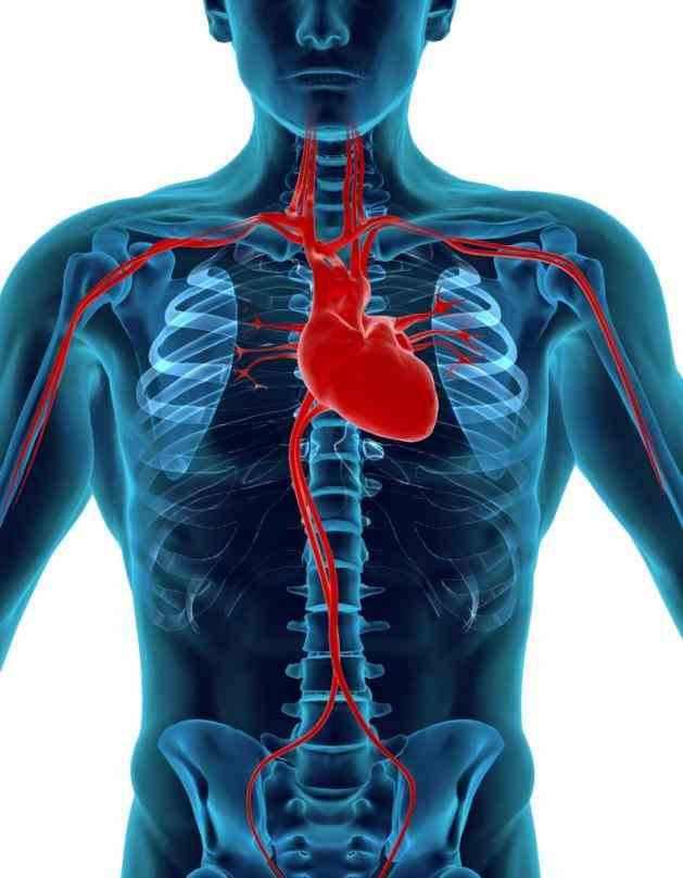 "Location In The Human Body reader asked us recently ""where is the heart located…is it on left side lingering"