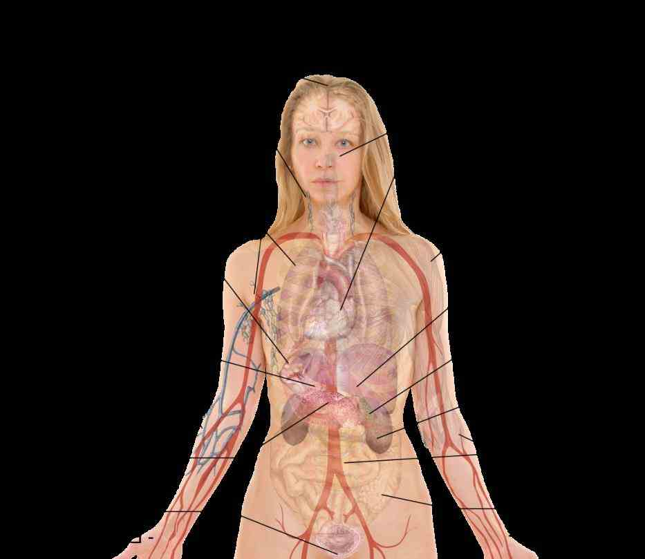 Images Of Human Body Organs Pictures Wallpapers