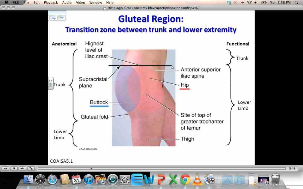 Of The Gluteal Region mar thank you for taking the time to show us gluteal region and some of