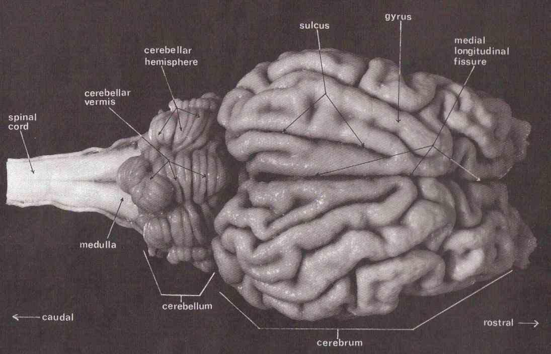 Labeled Diagram Of Sheep Skin | MedicineBTG.com