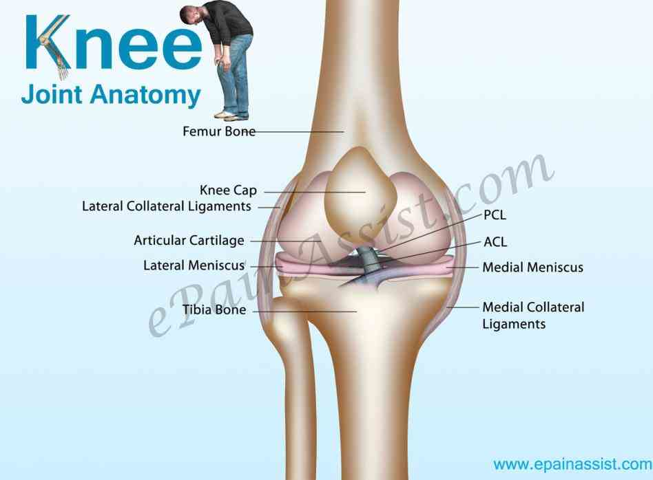 Anatomy Of Knee Ligaments Pictures Wallpapers