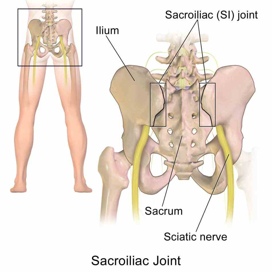 Anatomy Of The Sacroiliac Joint Pictures Wallpapers