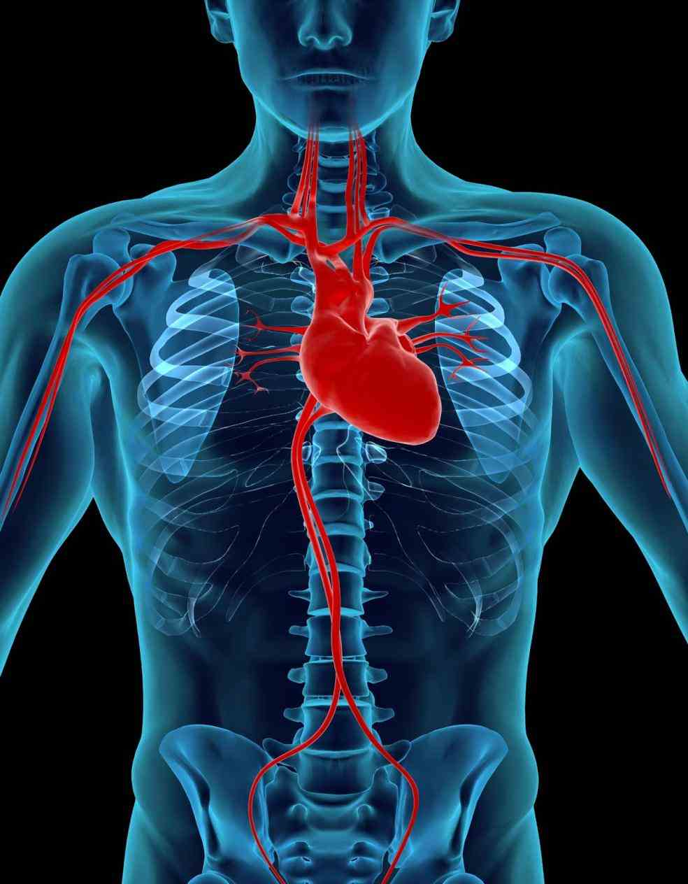 Location Of Human Heart In Body Pictures Wallpapers