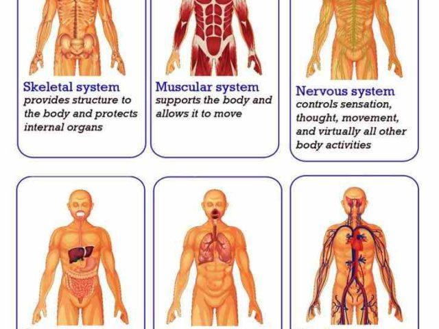 sensory organs of human body