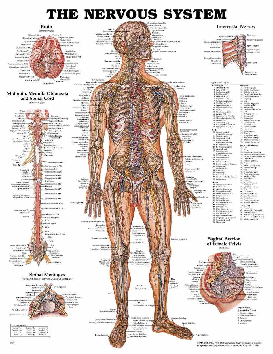 body see Anatomy Picture Of Human Body a rich collection of stock images vectors or photos for human anatomy