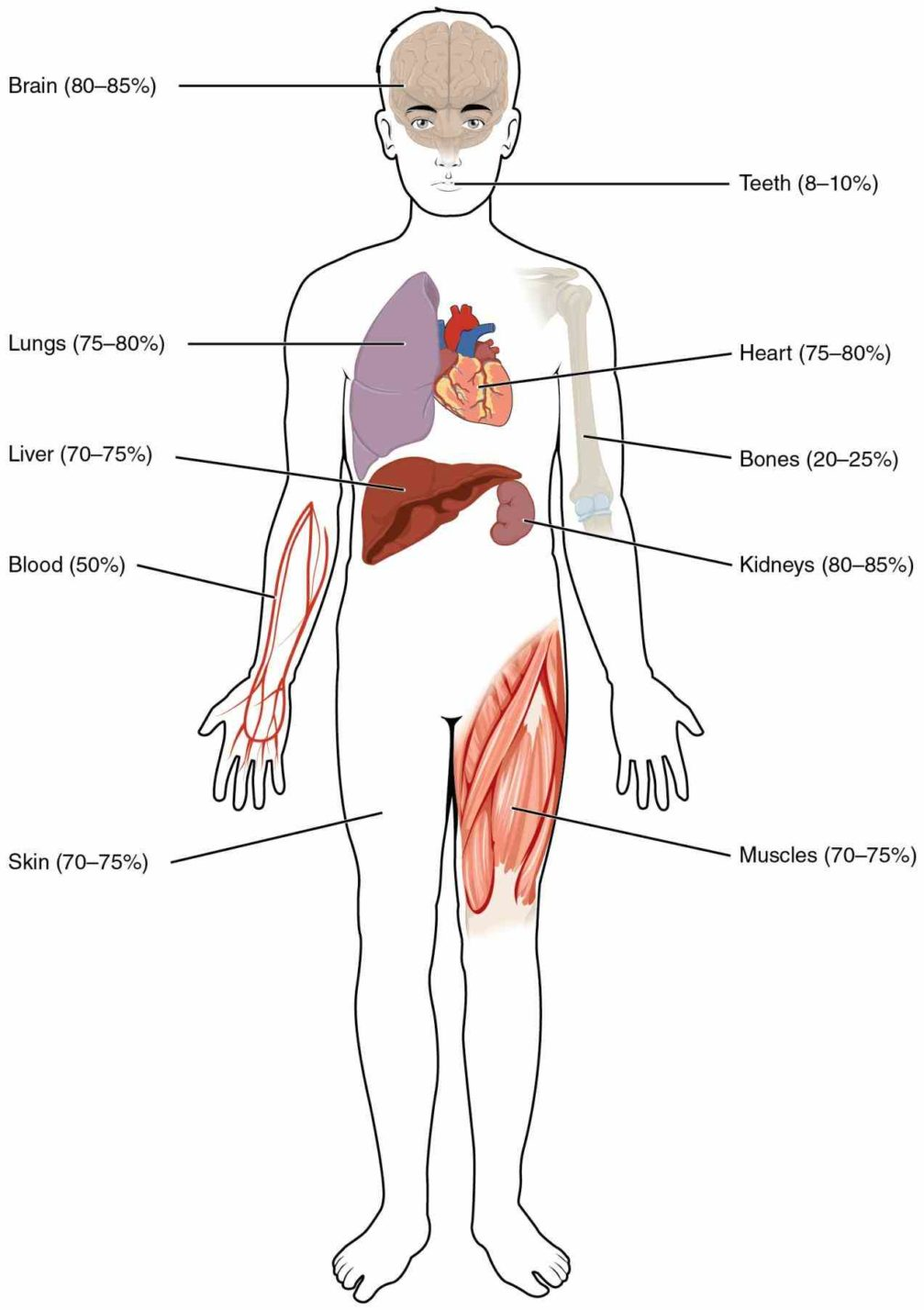 Bodythe Brain Different Parts Our Controldifferent Body We De Major Organs Of The Body And Their Functions Ago Top X on Store Er Diagram Examples