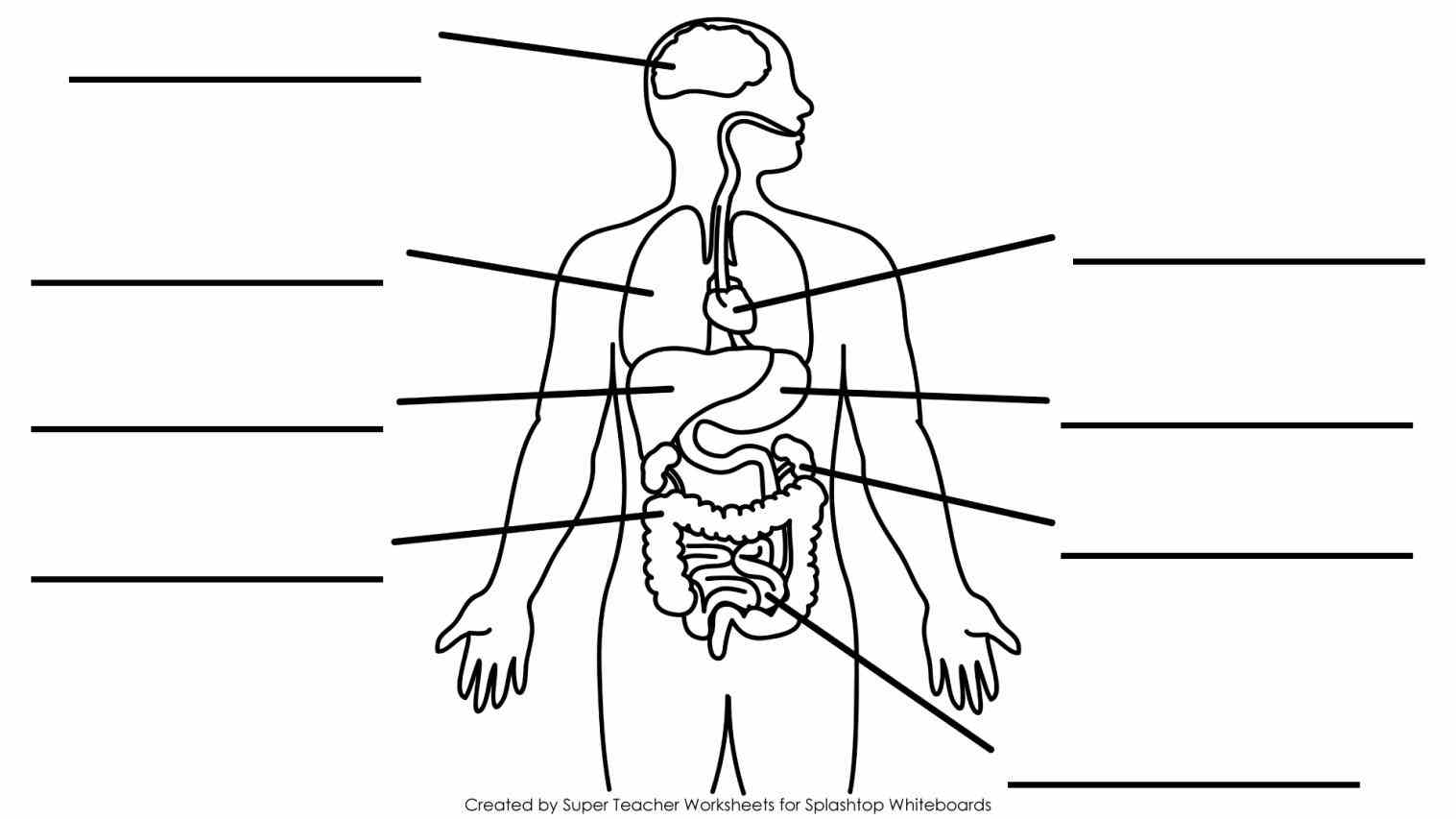 Diagram Of The Human Body With Labels Pictures Wallpapers