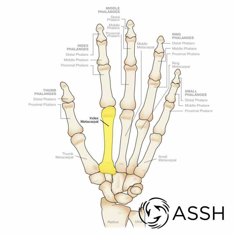 Anatomy Of The Wrist Bones Pictures Wallpapers
