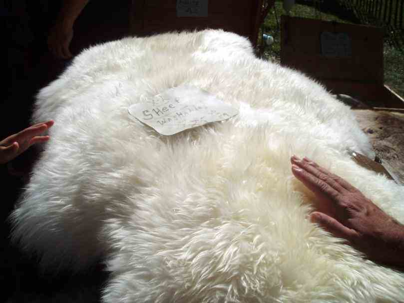 Labeled Diagram Of Sheep Skin Pictures Wallpapers